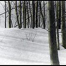 Poplars by Wayne King