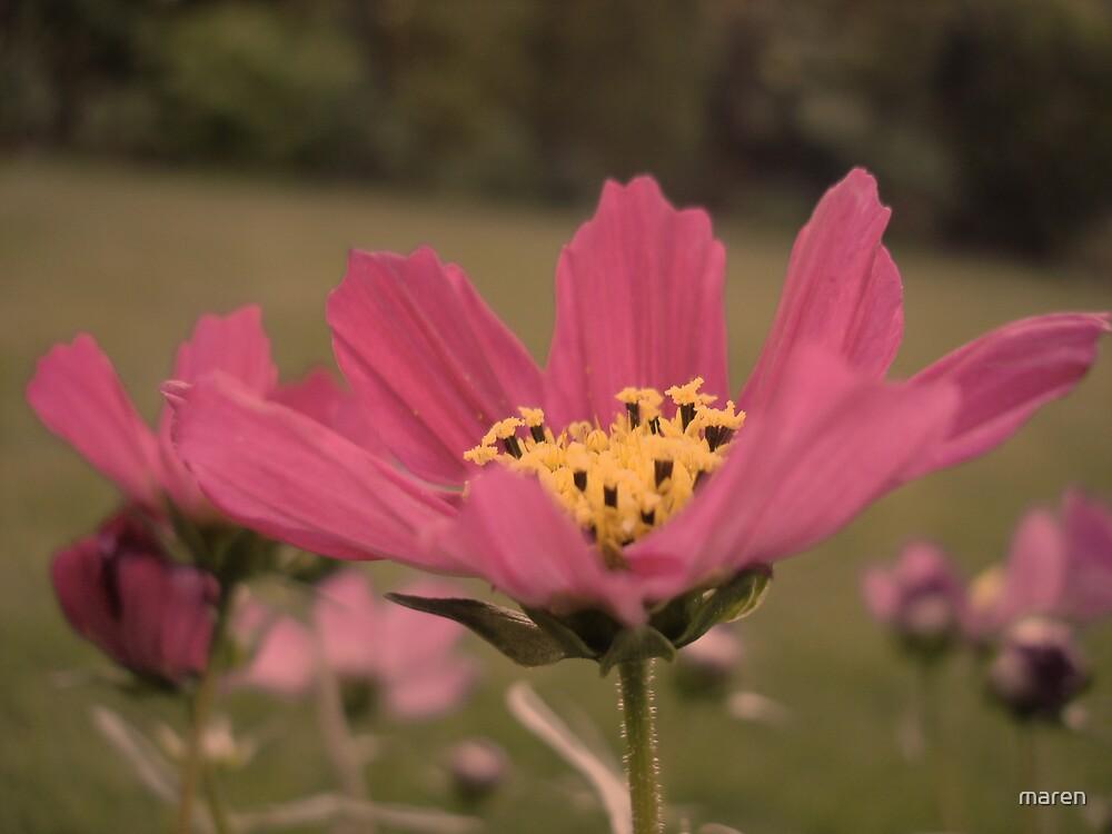 flower-power by maren