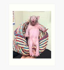 Naked Mole Rat In Chair Art Print