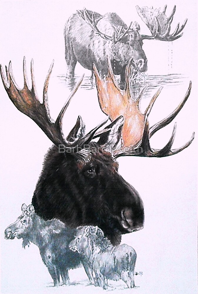 Moose by BarbBarcikKeith