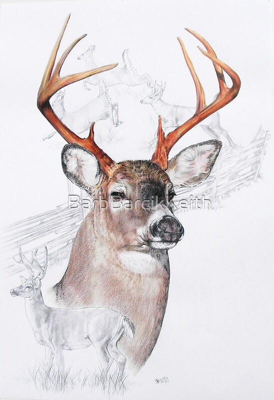 Quot White Tailed Deer Quot By Barbbarcikkeith Redbubble