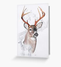 White Tailed Deer Greeting Card