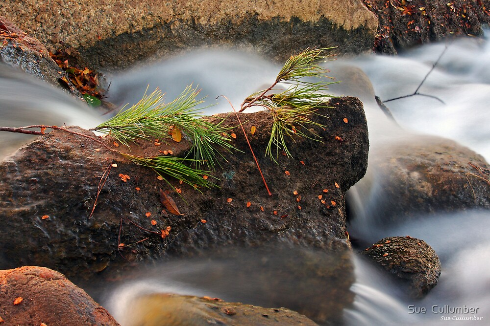 Evergreen Falls by Sue  Cullumber