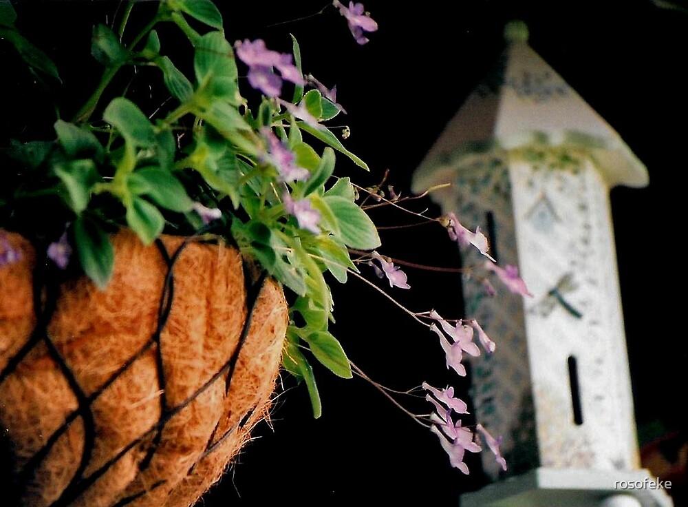 butterfly dream by rosofeke