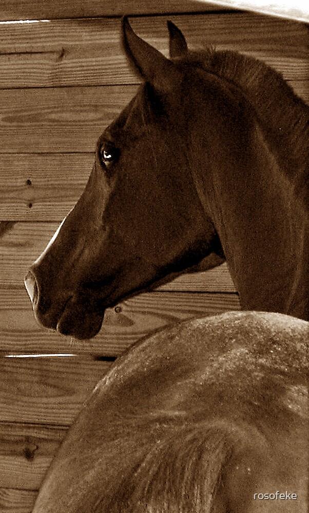 horsing around by rosofeke