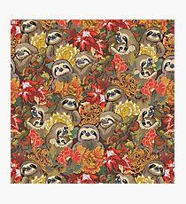 Because Sloths Autumn Photographic Print