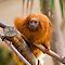 Weekly Contest 03 - Primates