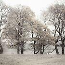 Autumn Trees No. 10 Stillness by Barry W  King