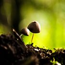 two little mushrooms by yortje