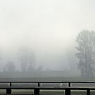 Spiderwebs and The Fog by Kat Miller
