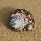 A Lonely Shell by peasticks