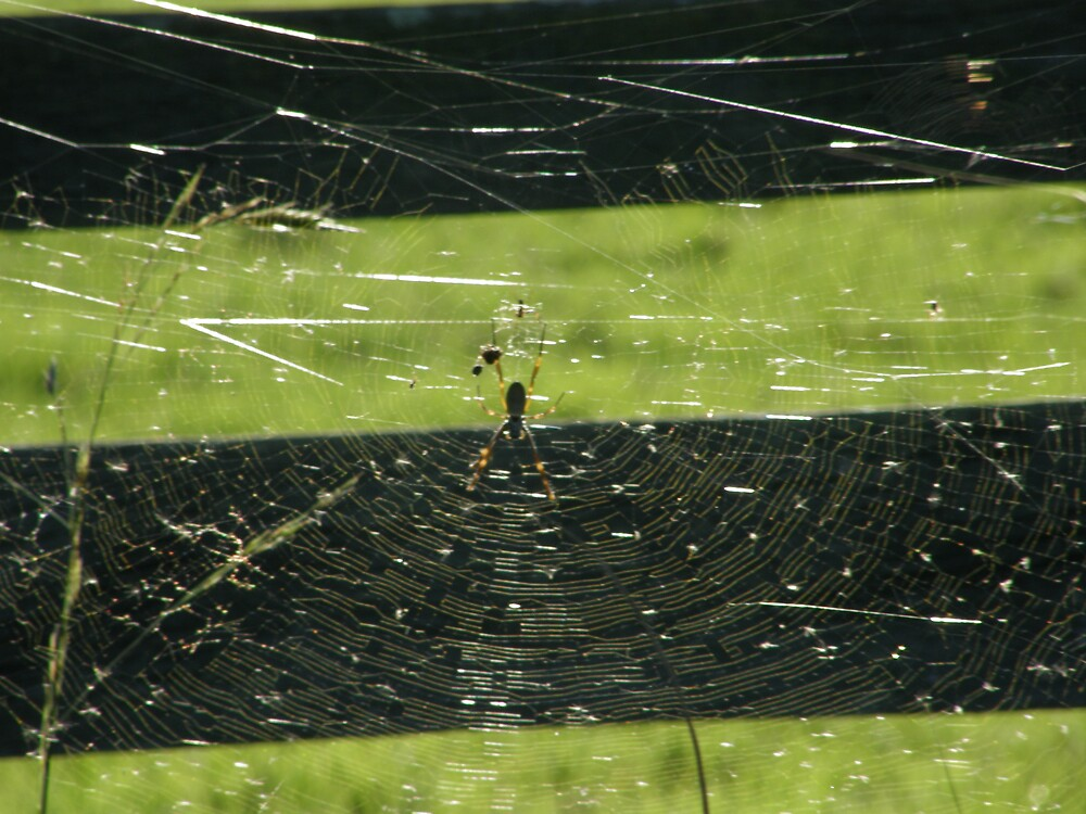 Spider Web by SoulSurfer