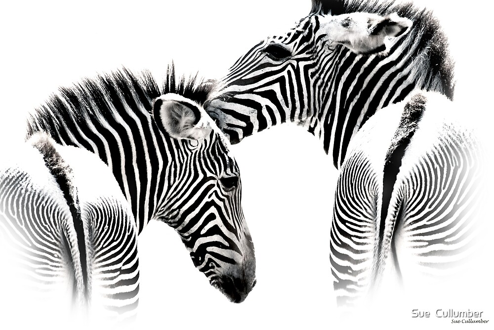 Zebra Kisses by Sue  Cullumber