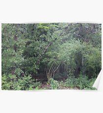 Rainy Day Trees  Poster
