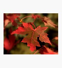 Fall Red Photographic Print