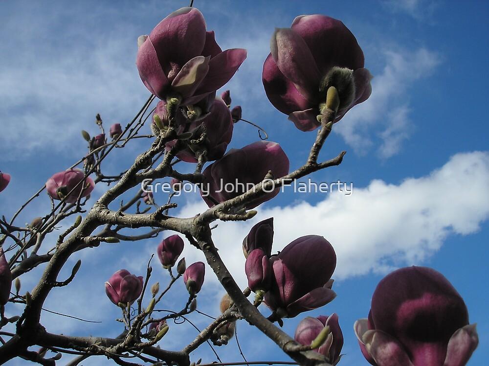 Magnolia 2 by Gregory John O'Flaherty