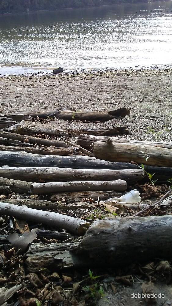 Driftwood by debbiedoda