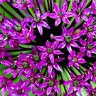 Allium (Macro) by Larry Trupp