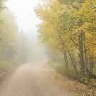 Foggy Dirt Road In The Autumn Season by Bo Insogna