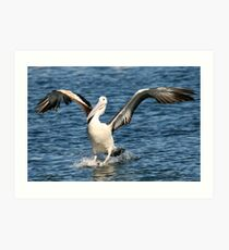 Australian Pelican 2 Art Print