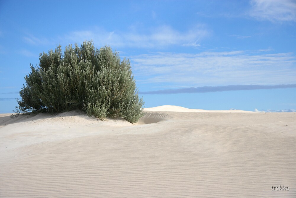 Salt Bush by trekka