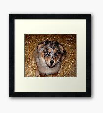 One more treat please!!! Framed Print
