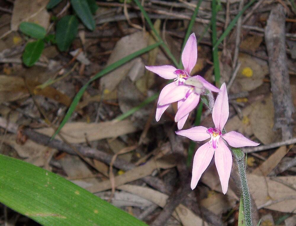 Wild orchids by georgieboy98