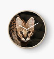 Nina (Savannah Katze) Uhr
