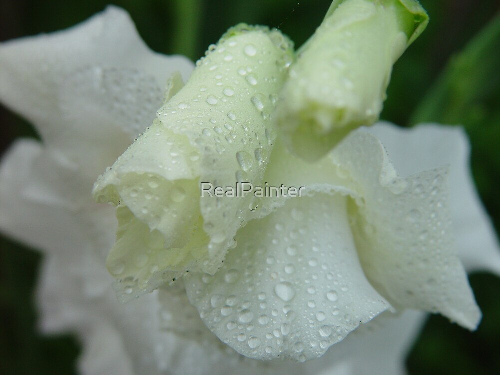 White dew 2  3  or 4 drops of dew by RealPainter