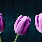Tulips On Wood by hurmerinta