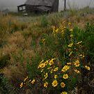 Homestead by Christopher Barker
