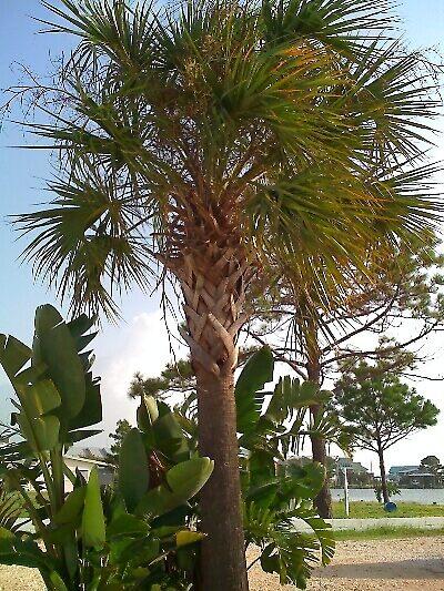 Island Tree by ScottM71