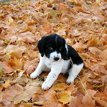 Puppy in Autumn by aura2000