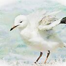 Seagull art 5851 by kevin chippindall
