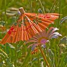 Umbrella for my daisy! by solareclips~Julie  Alexander