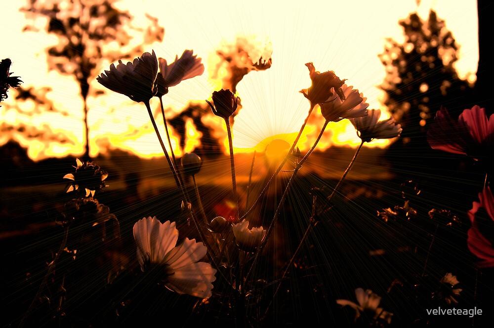 Cosmos Sunrise by velveteagle