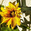 Sunflower And Trellis by Barry W  King