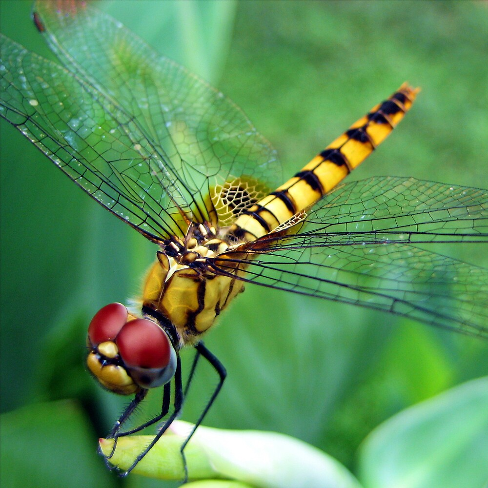 Dragonfly by Russell John