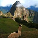 Machu Picchu, Andes by Honor Kyne