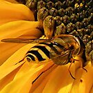bee and sunflower by Barry W  King