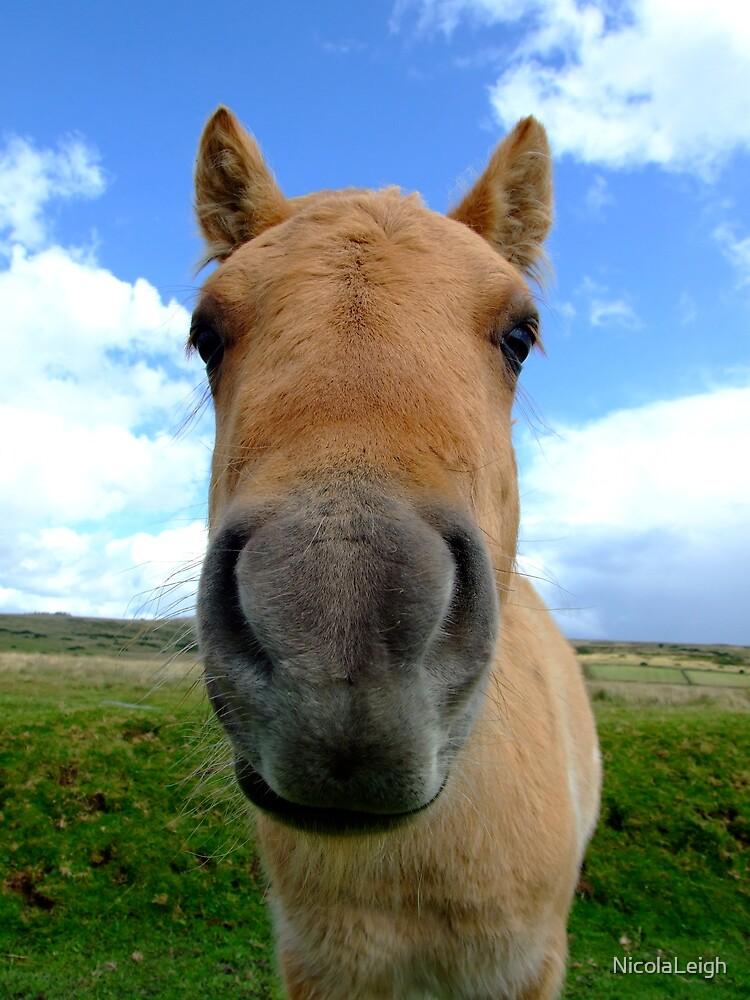 Dartmoor Pony by NicolaLeigh