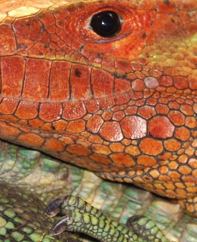 Lizard 2 by marycloch