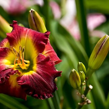 """Dragon King"" Daylily by jaydee1400"