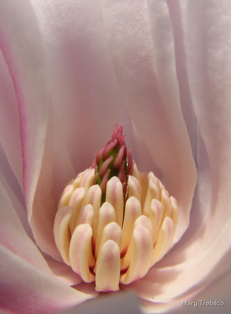 Profile of a Magnolia... by Mary Trebilco