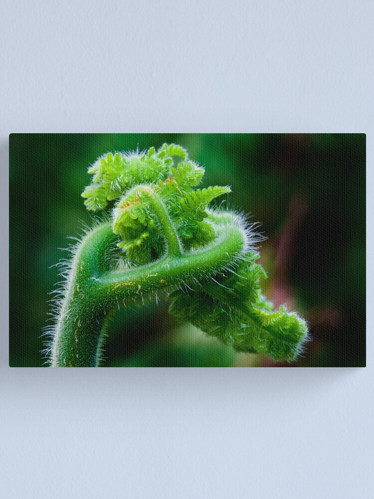 Alternate view of Fern Frond 2 Canvas Print