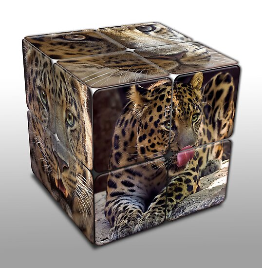 Leopard Cube by Cheri  McEachin