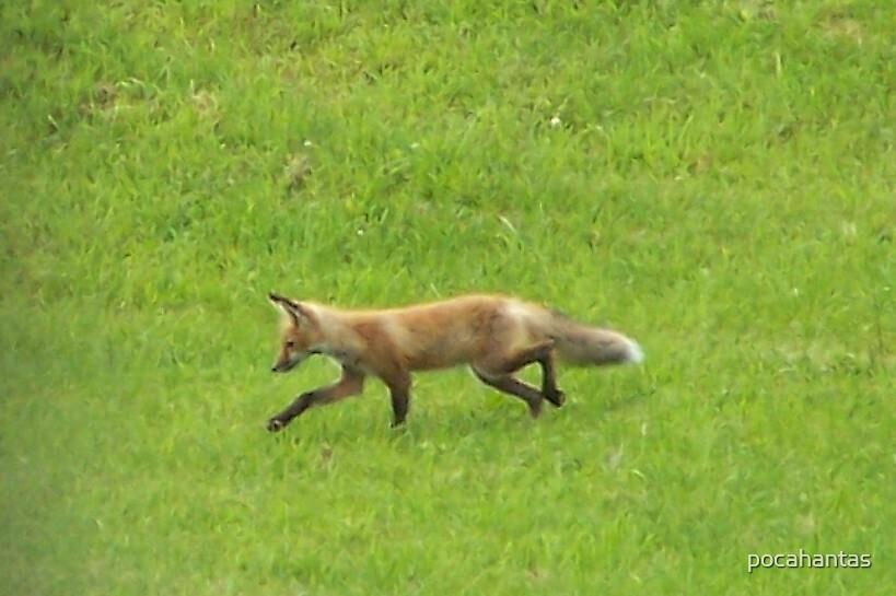 Foxy Huntress by pocahantas