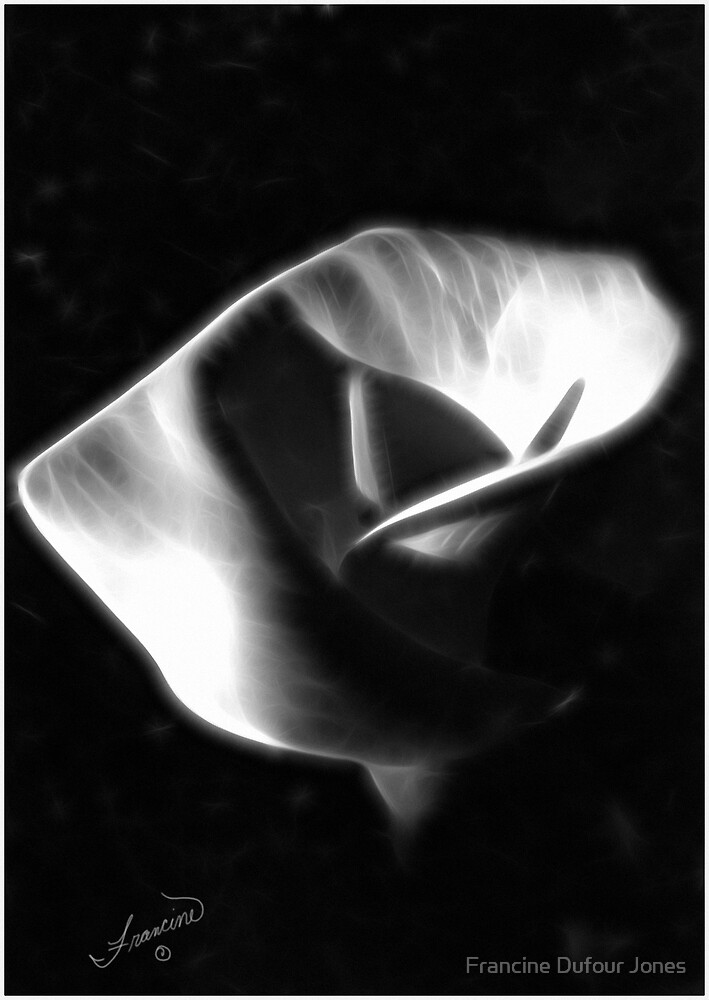 Glowing Calla Lily by Francine Dufour Jones