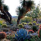 Desert Diversity by Sue  Cullumber