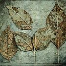 five leaves by Barbara Ingersoll